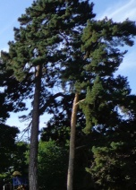 Coxs Park 120915