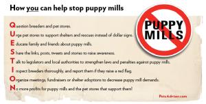puppy-mills